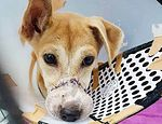 Perrita fue encontrada después de escapar de granja de carne de perro published in Offtopic