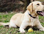 Adorable perro se hace el muerto para no tener que salir del parque published in Offtopic