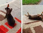 🦋🐕Pequeño cachorro juega adorablemente con una mariposa published in Mascotas