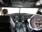 Gato ataca a piloto de avión y lo obliga a aterrizar de emergencia publicado en Offtopic