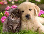 """""""Como perros y gatos"""": la historia detrás de la mítica frase publicado en Mascotas"""