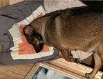 Familia texana pasa 12 horas en auto para que su perrita pueda parir publicado en Offtopic