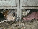 Se hizo cargo de almacén y descubre que venía con gatitos incluídos published in Offtopic