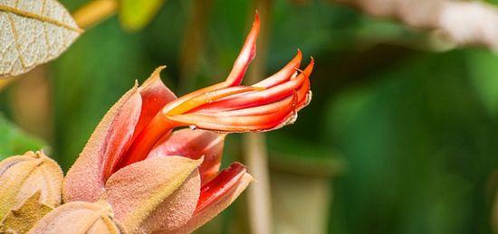 Las 10 flores extrañas y hermosas que debes conocer published in La Caja de Pandora Ω 10.600