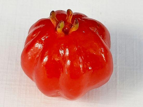 Tengo frutales nativos, exóticos en Mar del Plata y te los muestro! published in Offtopic