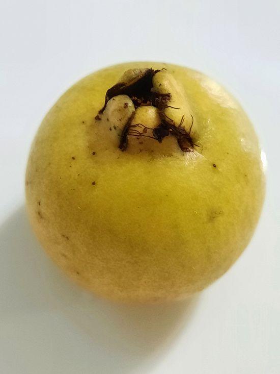 El Arazá amarillo es un frutal nativo demasiado rico! published in Offtopic