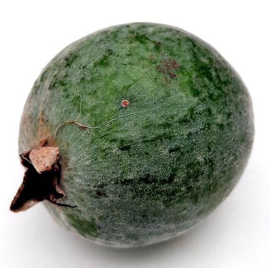 La Guayaba serrana es un frutal nativo delicioso! published in Offtopic