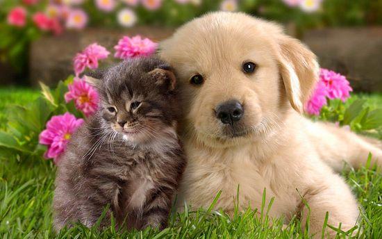 """""""Como perros y gatos"""": la historia detrás de la mítica frase published in Mascotas"""